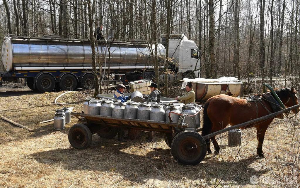 Заготовка березового сока в Лунинецком лесхозе